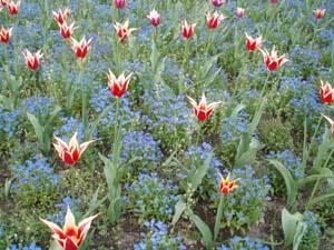 Flowers at Vojanovy Sady